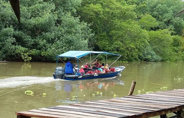 TOUR #4 Boat safari and Canopy or Jungle Hike